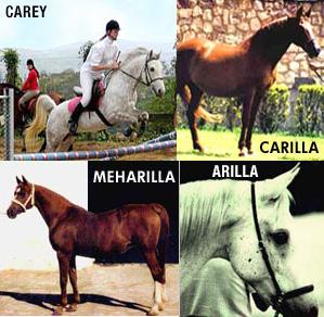 Equitacion. Caballos
