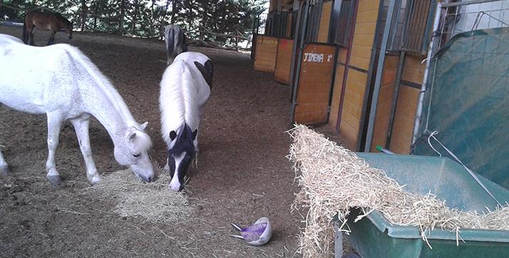 Actividades de granja escuela Burdin Zaldia